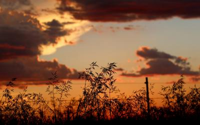 silhouette of rangeland plants against a sunset