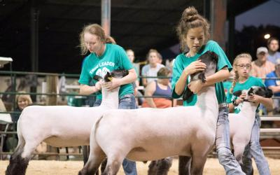 three female 4-H youth showing wool sheep