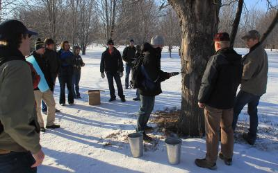 group of people gathered around a tapped silver maple tree