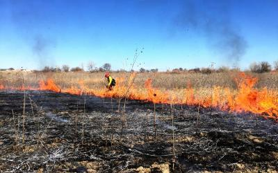 a prescribed burning taking place in a field