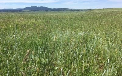 healthy rangeland with a diverse variety of grasses and plants throughout