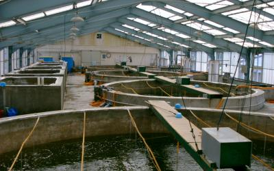 inside a licensed fish hatchery