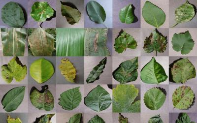 A collage of various plant diseases. Courtesy: USDA (iStock)