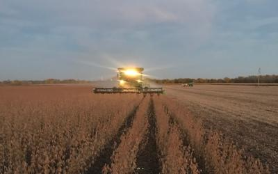 A combine harvesting soybeans at dusk.