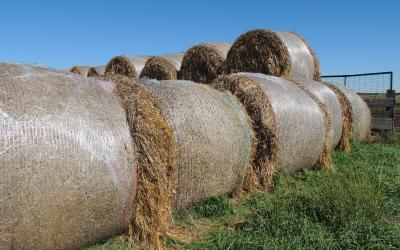 Round hay bales wrapped with net wrap in a stack.