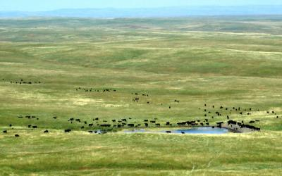 A herd of cattle gather around a stock pond on a vast, lush grassland. Courtesy: USDA [CC BY 2.0]