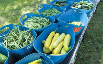 Variety of fresh vegetables in blue plastic totes on a table at a farmers market.