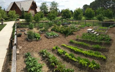A group of raised ground beds with crops growing in them at McCrory Gardens in Brookings, South Dakota.