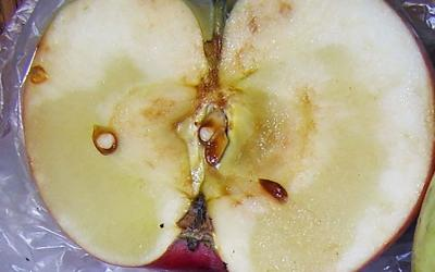 An apple sliced in half revealing a ripe core and brown seeds.