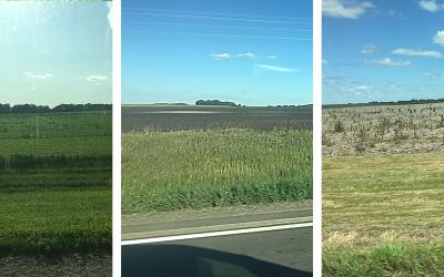 Three South Dakota fields that claimed prevent plant. The first field is planted with a cover crop. The second field has no cover crops, but tillage was completed to control weeds. The third has no cover crops and weeds are growing throughout.