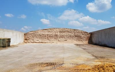 High-moisture corn being stored in a bunker for use as cattle feed.