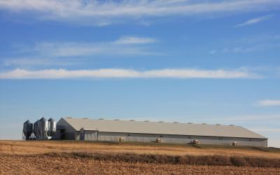 A large swine barn at the edge of a field.