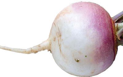A white to pink trunip bulb.