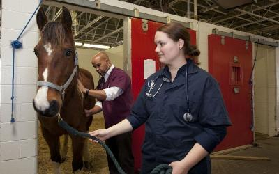 two veterinarians checking a horse inside a barn