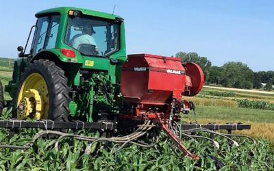 A green tractor, pulling a red, high-clearance planter through a field of emerging corn.