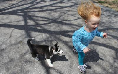 A young female child with red hair running outside alongside a puppy.