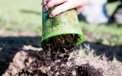 A child emptying a cup of fresh compost into a bed of soil.