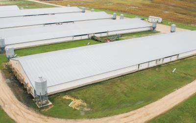 An aerial view of a series of swine finishing facilities.