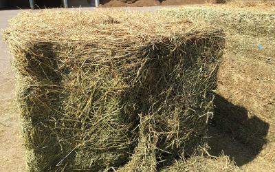 A large square bale of Alfalfa hay that has been put up for storage.