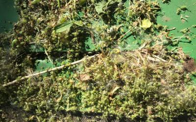Large mass of small green insects and plant debris present on green implement.