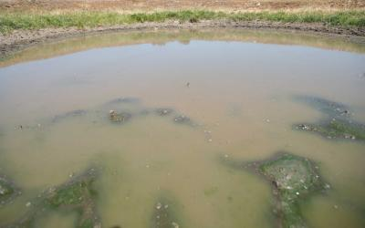 A stock pond with algae blooms developing throughout.