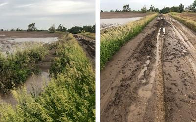 A heavily tilled field showing signs of severe topsoil loss due to erosion. Next to it, there is a no-till field with no noticeable signs of erosion.