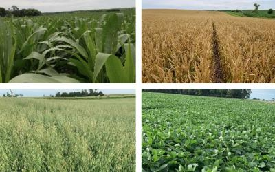 Four photos depicting field progress for corn, winter wheat, oats and soybean as of July 10, 2020.