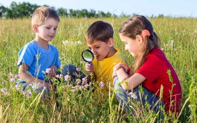 A group of children examining the parts of a wildflower in a meadow.