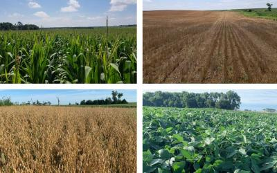 Four photos depicting field progress for corn, winter wheat, oats and soybean as of July 31, 2020.