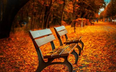several park benches covered in orange leaves