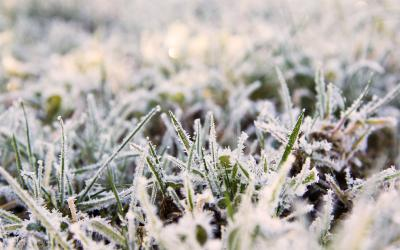Lawn covered with frost.