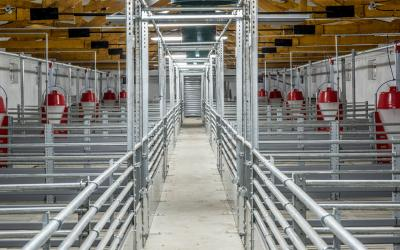 Swine facility interior.