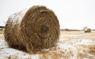 Frosted hay bale in winter pasture.
