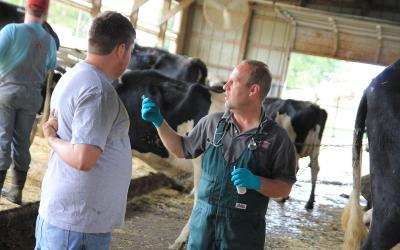 Two people having a conversation, one being the herd manager and the other the employee in a dairy free stall barn.)