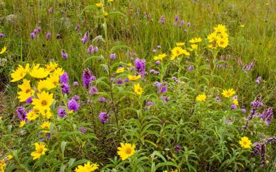 Variety of South Dakota native plants.