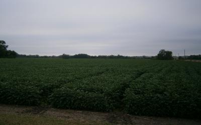 a field with plots of soybeans